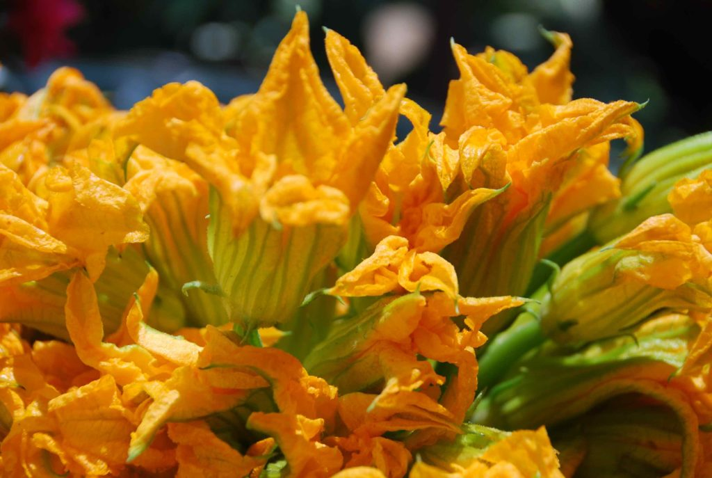Flores de Calabaza main