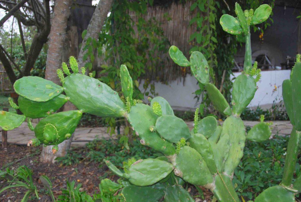 Cactus Paddles 1