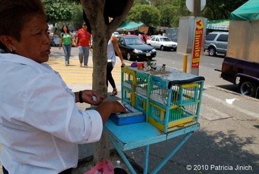 Quesadillas at the Mexico City Fair 6-thumb-510x342-1116