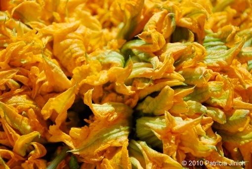 Squash Blossoms 1-thumb-510x342-1167