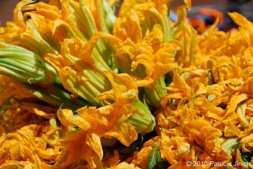 Squash Blossoms 3-thumb-510x342-1171
